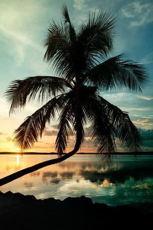 https://imgc.artprintimages.com/img/print/palm-paradise-at-sunset-florida-usa_u-l-pz4og90.jpg?p=0
