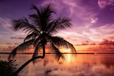 Palm Paradise at Sunset - Florida - USA-Philippe Hugonnard-Photographic Print