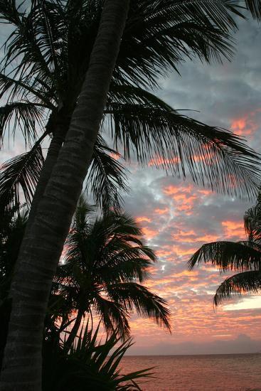 Palm Sunrise Vertical-Robert Goldwitz-Photographic Print