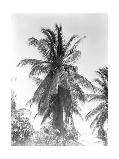 Palm Tree, 1925-Tina Modotti-Photographic Print