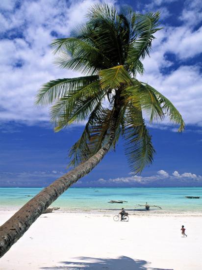 Palm Tree and Beach, Zanzibar, Tanzania-Peter Adams-Photographic Print