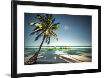 Palm Tree and Shadows on a Tropical Beach, Praia Dos Carneiros, Brazil- Dantelaurini-Framed Photographic Print