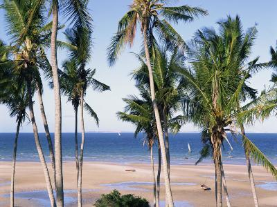 Palm Tree and Tropical Beach on the Coast of Mozambique, Africa-Groenendijk Peter-Photographic Print
