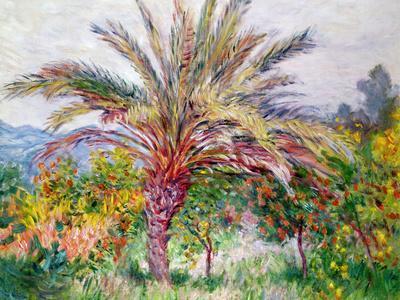 https://imgc.artprintimages.com/img/print/palm-tree-at-bordighera-c-1884_u-l-plg3rv0.jpg?p=0