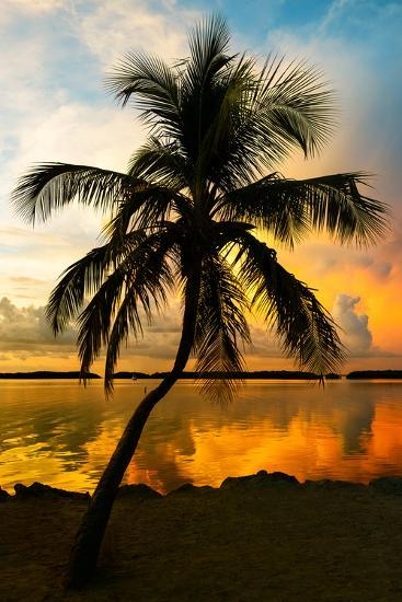 Palm Tree at Sunset - Florida-Philippe Hugonnard-Photographic Print