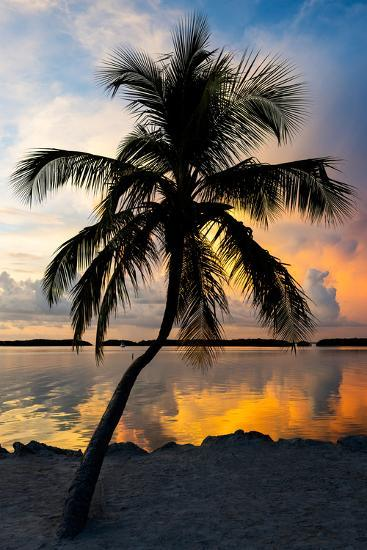Palm Tree at Sunset - Florida-Philippe Hugonnard-Photographic Print