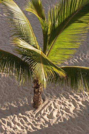 Palm Tree, Bavaro Beach, Higuey, Punta Cana, Dominican Republic-Lisa S^ Engelbrecht-Photographic Print