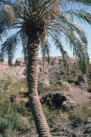Palm Tree Below Lion of Babylon, Iraq, 1977-Vivienne Sharp-Photographic Print