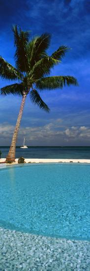 Palm Tree by a Pool Overlooking the Ocean, Tahiti, French Polynesia--Photographic Print