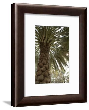Palm tree from below. Oman.-Tom Norring-Framed Photographic Print
