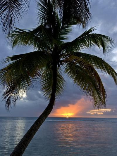 Palm Tree in Front of a Beautiful Sunset over the Water-Michael Melford-Photographic Print