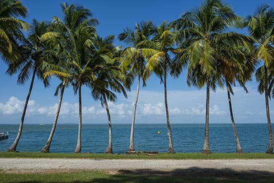 Palm Tree Line, Royal Island, Iles Du Salut, Devils Island, French Guiana, Department of France-Michael Runkel-Photographic Print
