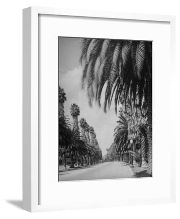 Palm Tree-Lined Street in Beverly Hills-Alfred Eisenstaedt-Framed Premium Photographic Print