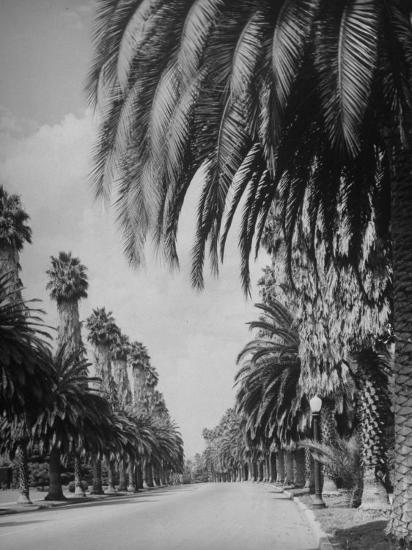 Palm Tree-Lined Street in Beverly Hills-Alfred Eisenstaedt-Photographic Print