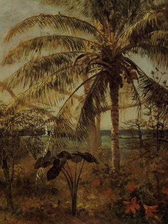 https://imgc.artprintimages.com/img/print/palm-tree-nassau-1892_u-l-p1y0u90.jpg?p=0