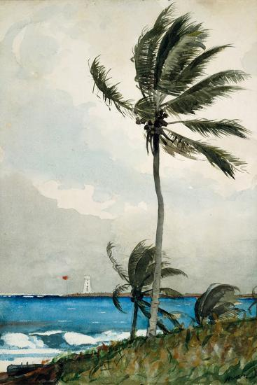 Palm Tree, Nassau, 1898-Winslow Homer-Giclee Print