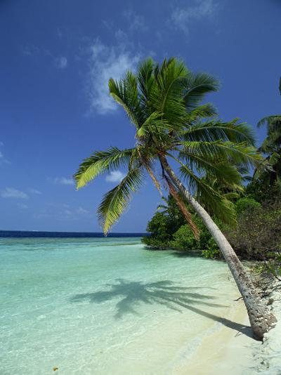 Palm Tree on a Tropical Beach on Embudu in the Maldive Islands, Indian Ocean-Fraser Hall-Photographic Print