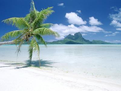 Palm Tree on a Tropical Beach--Photographic Print