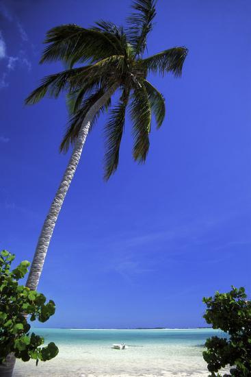 Palm Tree on a White Sand Beach, Bahamas-Natalie Tepper-Photographic Print
