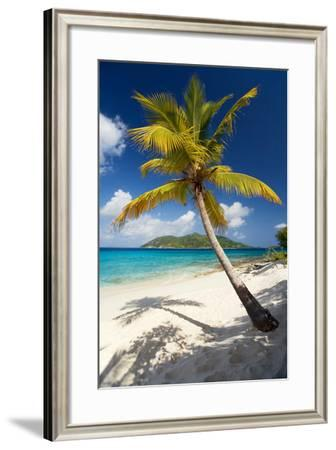 Palm Tree on Sandy Island, British Virgin Islands-Susan Degginger-Framed Photographic Print
