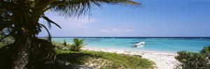 Palm Tree on the Beach, Caribbean Sea, Punta Bete, Yucatan, Mexico