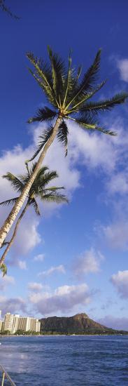Palm Tree on the Beach, Diamond Head, Waikiki Beach, Honolulu, Oahu, Hawaii, Usa--Photographic Print
