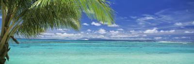 Palm Tree on the Beach, Huahine Island, Society Islands, French Polynesia--Photographic Print