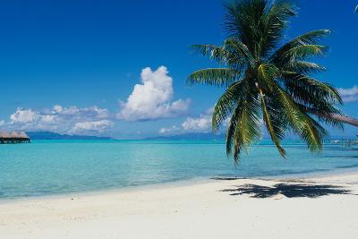 Palm Tree On The Beach, Moana Beach, Bora Bora, Tahiti, French Polynesia--Photographic Print