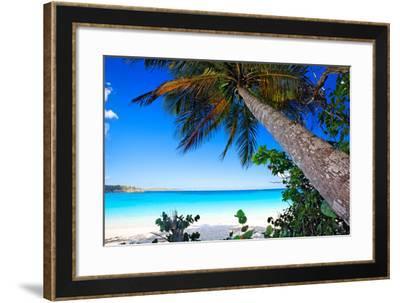 Palm Tree on Trunk Bay Beach, USVI-George Oze-Framed Photographic Print