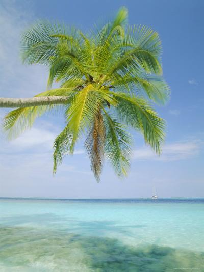 Palm Tree Overhanging the Sea, Kuda Bandos, North Male Atoll, the Maldives, Indian Ocean-Lee Frost-Photographic Print