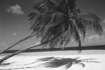 Palm Tree Shadow on Sand--Photographic Print