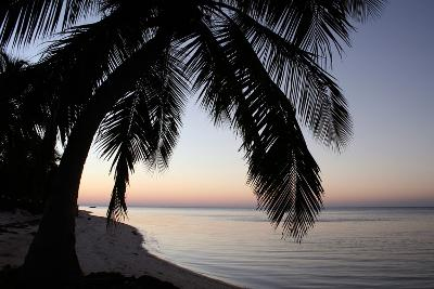 Palm Tree Sunset-Brent Anderson-Photographic Print