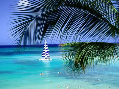 Palm Tree, Swimmers and a Boat at the Beach, Waikiki, U.S.A.-Ann Cecil-Photographic Print