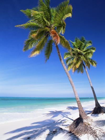 Palm Tree, White Sand Beach and Indian Ocean, Jambiani, Island of Zanzibar, Tanzania, East Africa-Lee Frost-Photographic Print