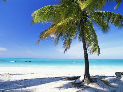 Palm Tree, White Sandy Beach and Indian Ocean, Jambiani, Island of Zanzibar, Tanzania, East Africa-Lee Frost-Photographic Print