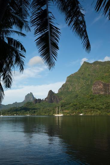 Palm Tree with Boat in the Background, Moorea, Tahiti, French Polynesia--Photographic Print