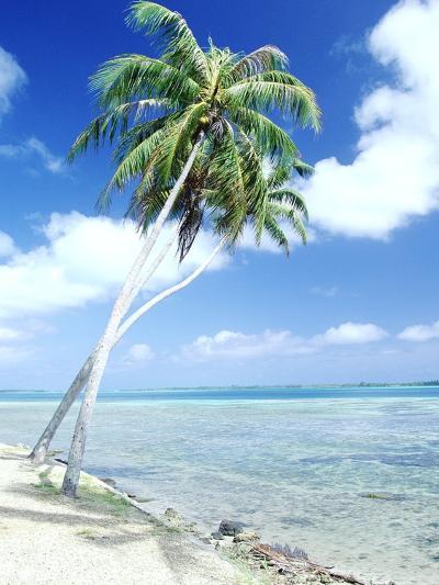 Palm Trees Along Shoreline--Photographic Print