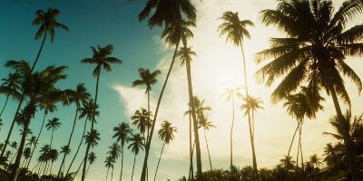 Palm Trees Along the Beach in Morro De Sao Paulo, Tinhare, Cairu, Bahia, Brazil--Photographic Print