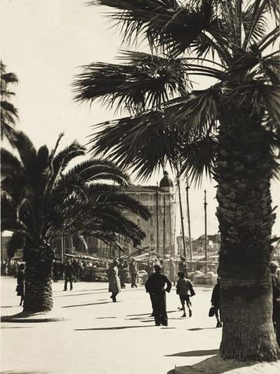Palm Trees Along the Harbour's Edge at Split, Croatia--Photographic Print