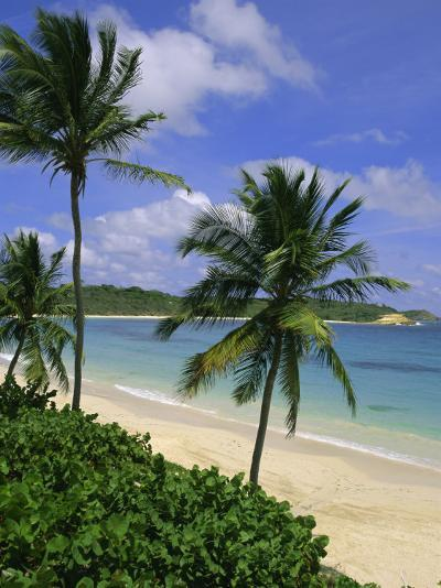 Palm Trees and Beach, Half Moon Bay, Antigua, Leeward Islands, Caribbean, West Indies-John Miller-Photographic Print
