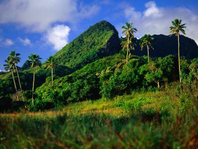 Palm Trees and Dense Jungle Peaks, Rarotonga, Southern Group, Cook Islands-Peter Hendrie-Photographic Print