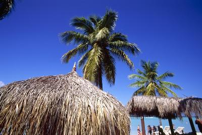 Palm Trees and Palapa Umbrellas Palm Beach Aruba-George Oze-Photographic Print