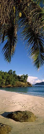 Palm Trees and Rocks on a Small Secluded Beach on North Island, Seychelles--Photographic Print