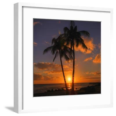 Palm Trees and Setting Sun (Square), Kauai Hawaii-Vincent James-Framed Photographic Print