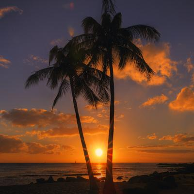 https://imgc.artprintimages.com/img/print/palm-trees-and-setting-sun-square-kauai-hawaii_u-l-q1gdtmn0.jpg?p=0