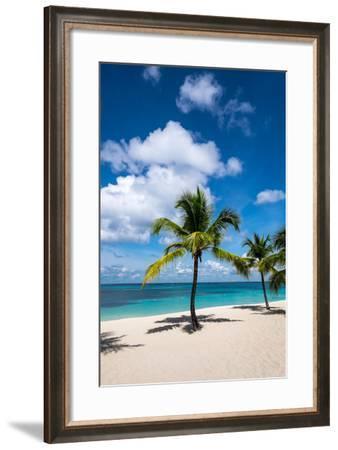 Palm Trees and their Shadows on a Pristine Caribbean Sea Beach-Jonathan Irish-Framed Photographic Print