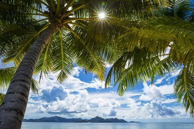 Palm Trees and Tropical Beach, La Digue, Seychelles-Jon Arnold-Photographic Print