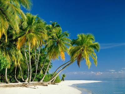 Palm Trees and Tropical Beach, Maldive Islands, Indian Ocean-Steve Vidler-Photographic Print