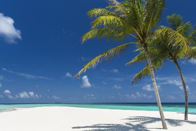 Palm Trees and Tropical Beach, Maldives, Indian Ocean, Asia-Sakis Papadopoulos-Photographic Print