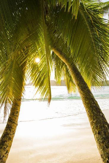 Palm Trees and Tropical Beach, Southern Mahe, Seychelles-Jon Arnold-Photographic Print